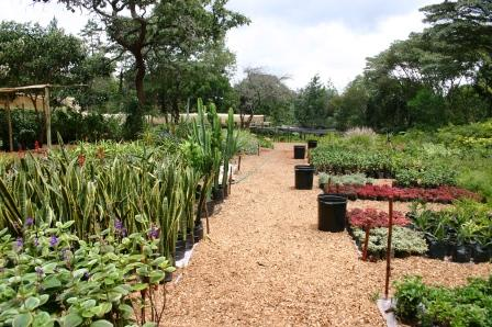 Tropical Plant Nursery Kenya