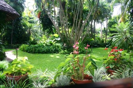 Tropical Plant Nursery Kenya Malindi